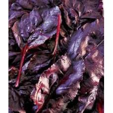 Organic Beetroot Bulls Blood