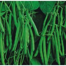 Organic Beans Dwarf French - Aiguillon