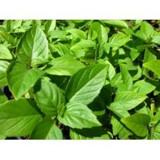 Organic Basil, Cinnamon