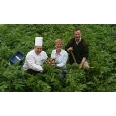 Growing for Restaurants - Salads for all Seasons - Sunday 25th March 2018 with Ingrid Foley