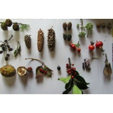 Growing Trees From Seed - Saturday 6th October 2018 - with Wayne Frankham