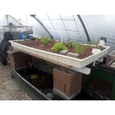 Aquaponics for Beginners (Sunday 17th October 2021) Tony Mellor