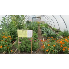 Growing in Polytunnels - An Introduction Saturday 13th October 2018  with Hans Wieland.