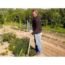 Masterclass on Healthy Soil and Healthy Plants -with a session on growing unusual vegetables -  NEW DATE: Sunday 10th September 2017 with Klaus Laitenberger