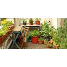 Urban Gardening, growing in small spaces and containers - Saturday 21st April 2018 with Ingrid Foley