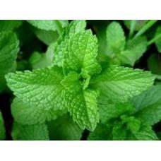 Organic Mint, Peppermint