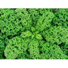 Westland Winter Kale