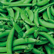 Organic Pea (Sugar Snap) Nairobi NEW