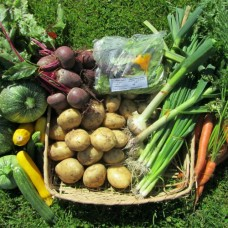 Plan a Year's  Harvest - Start Now - Sunday 26th February 2017 with Ingrid Foley