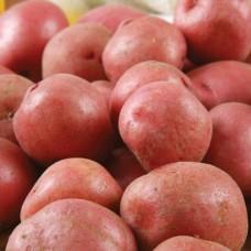 Organic Setanta Potatoes