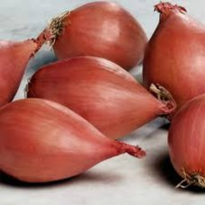 Organic Shallots -Red Sun 500g (Spring Planting)