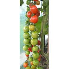 Organic Tomato Bartelly F1