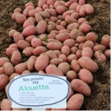 Alouette AVAILABLE NOW
