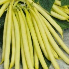 Organic Beans  Dwarf French - Helios (yellow)