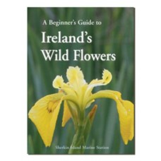 A Beginner's Guide to ireland's Wildflowers