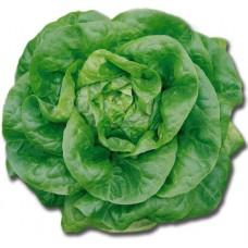 Organic Lettuce Brighton