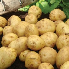 Organic British Queen Potatoes