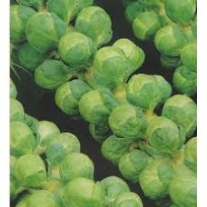 Organic Brussels Sprouts - 'Groninger'