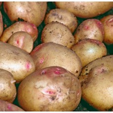 Organic Cara Potatoes AVAILABLE NOW