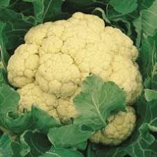 Organic Cauliflower Medaillon F1