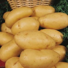 Organic Charlotte Potatoes