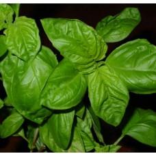 Organic Basil, Chen