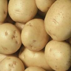 Organic Colleen Potatoes