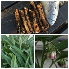Organic Comfrey Cuttings (6 Cuttings)