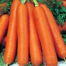 Organic Carrot Berlicum