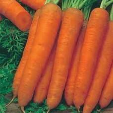 Organic Carrot Resistafly