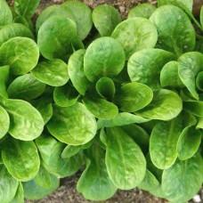 Organic Corn Salad Vit