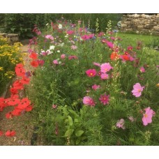 Learn how to grow flowers all year round  Saturday 23rd June 2018 with Jill Scott