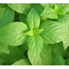 Organic Basil, Lemon