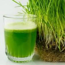 Organic Wheatgrass Grain