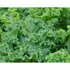 Organic Kale Halboher Grun Krauser