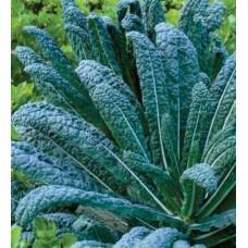 Organic Kale Nero di Toscana