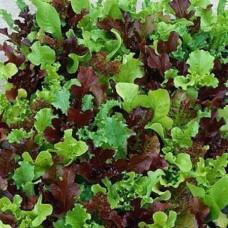 Organic Lettuce Baby leaf mix