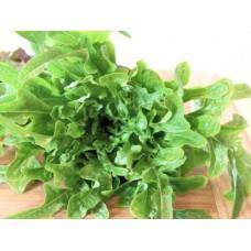 Organic Lettuce Cerbiatta