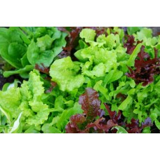 Organic Lettuce Mixed Leaves