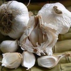 Organic Garlic Messidor (Autumn planting) 250g = approx 4 bulbs