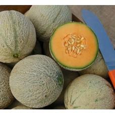 Organic Melon Sivan F1