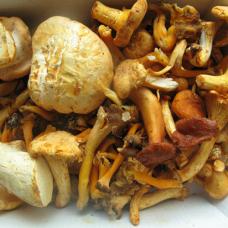 Wild Mushroom Foraging (Sunday 25 August 2019)