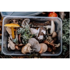 Wild Mushroom Foraging (Saturday 8th August 2021) Tina Pommer & Finn Melia