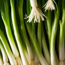 Organic Onion Scallion Parade