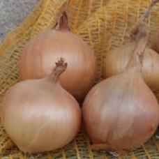 Organic Oniion Sets -Sturon (Spring Planting)
