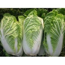 Organic Oriental Chinese Cabbage Granat