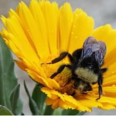 Organic Bee Mix