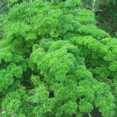 Organic Parsley, Moss Curled