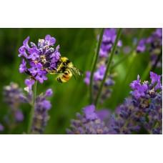 Wild Pollinator Gardens (Saturday May 23rd)