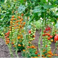 Polytunnel Growing - Summer Workshop  Saturday June 9th 2018 with Hans Wieland